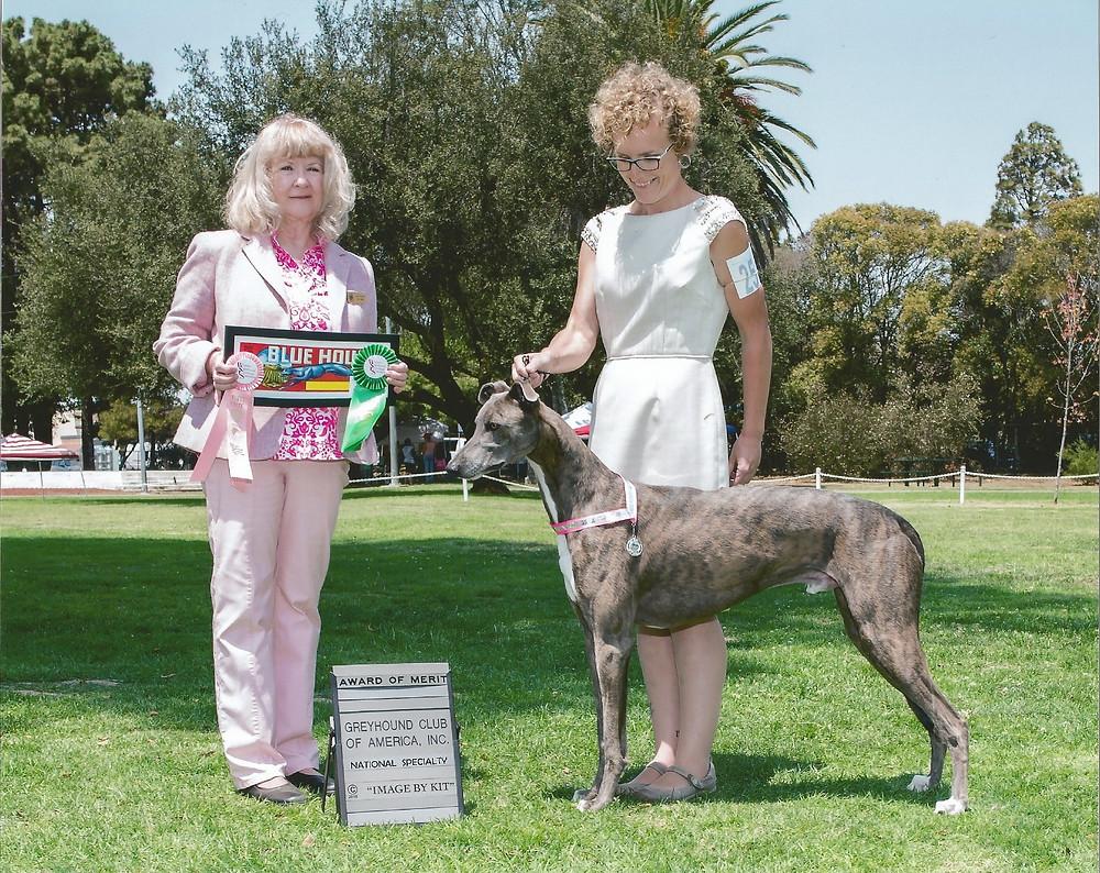 DC Windrock Batoutahellius SC, aka Sonic, wins Best Coursing Dog and an Award of Merit under judge Carole Beyerle (Excelsior Salukis, California)