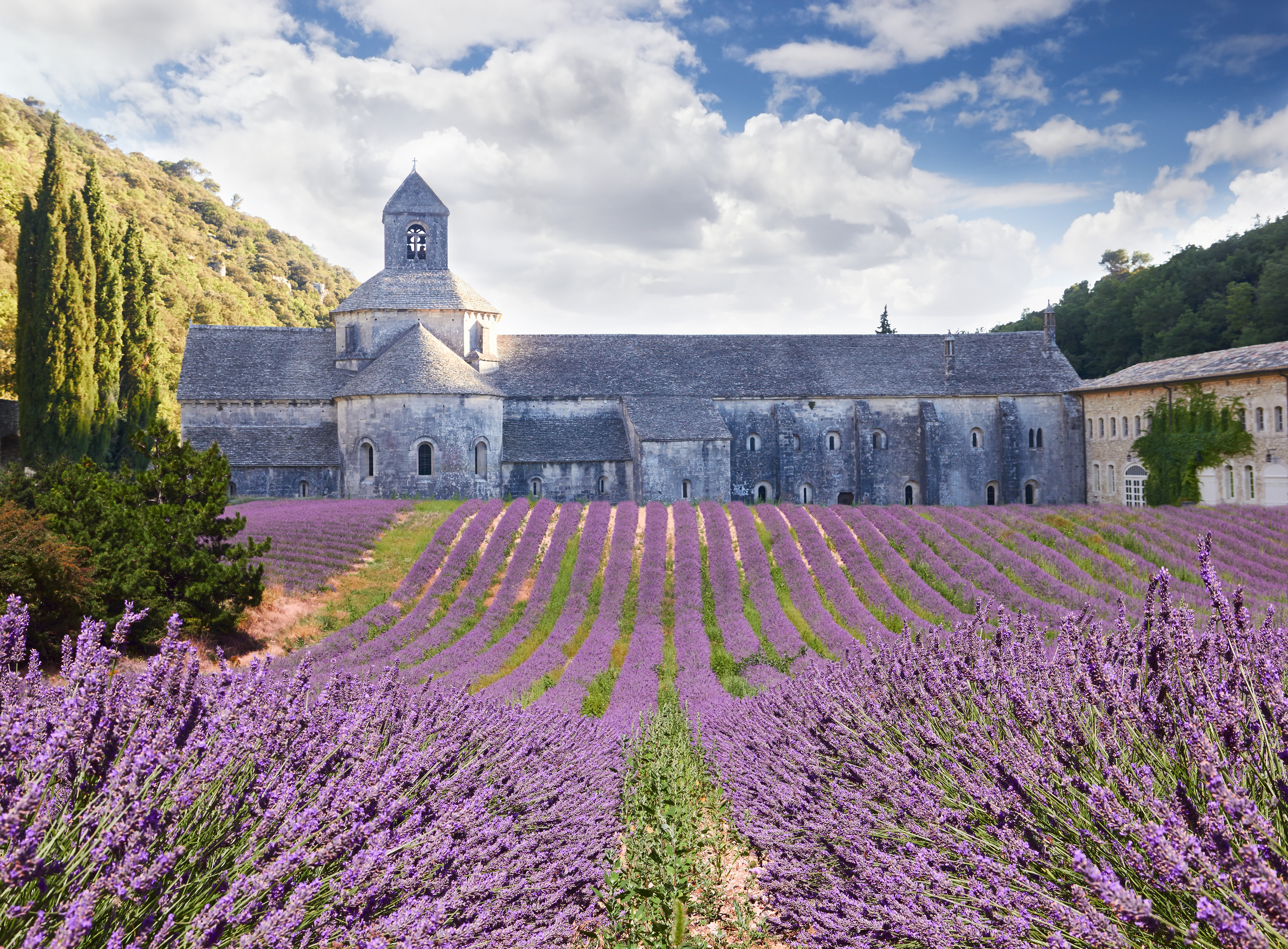 Senanque Abbey In Vaucluse, Provence, France