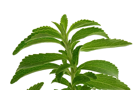stevia-plant.png