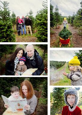 Tree Farm Christmas Minis