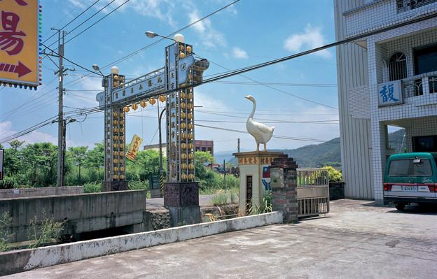 """20_<真假之間>動物系列之20  宜蘭縣.礁溪,1998。  20""""×24"""""""