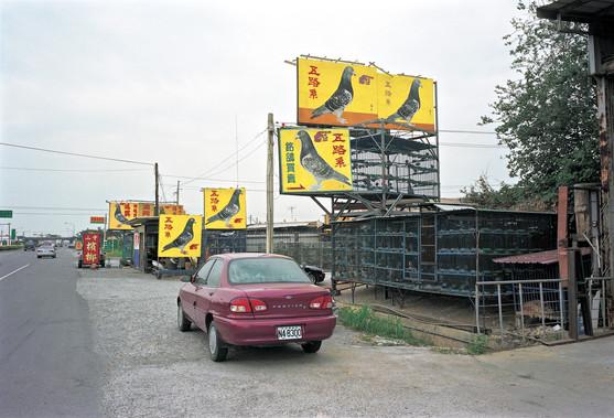 11_<真假之間>動物系列之11  雲林縣.西螺,1998。