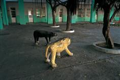 """27_<真假之間>動物系列之27  高雄.前金國民小學,1994。  40""""×60"""""""