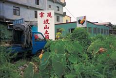 """02_<真假之間>動物系列之2  台中縣清水,1999。 20""""×24"""""""