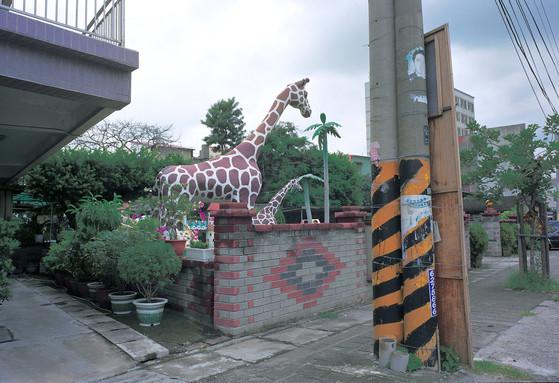 """03_<真假之間>動物系列之3  台中縣清水,1999。 20""""×24"""""""
