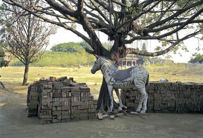 """23_<真假之間>動物系列之23  台南縣.南鯤鯓,1994。  40""""×60"""""""