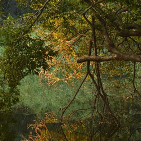 A Bird watcher's Delight- Sanjay Gandhi National Park, Mumbai