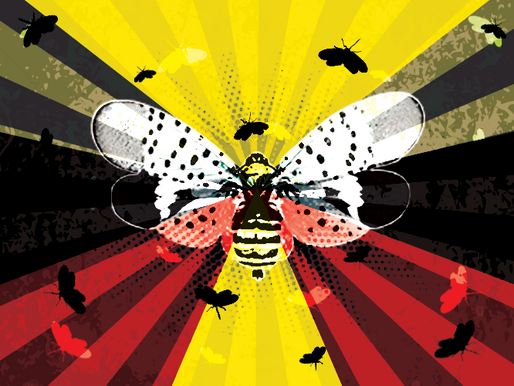 The Spotted Specter from the Far East: The Spotted Lanternfly