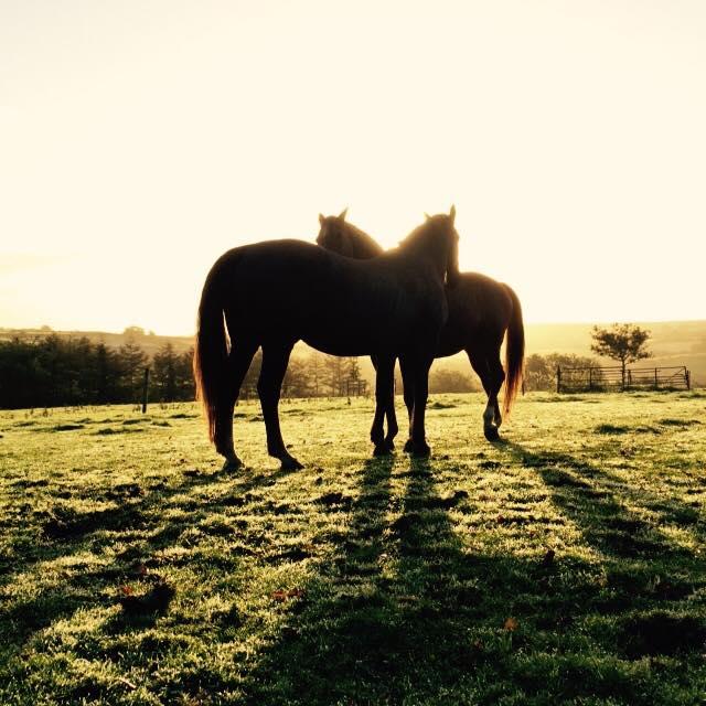 Oak_Horses