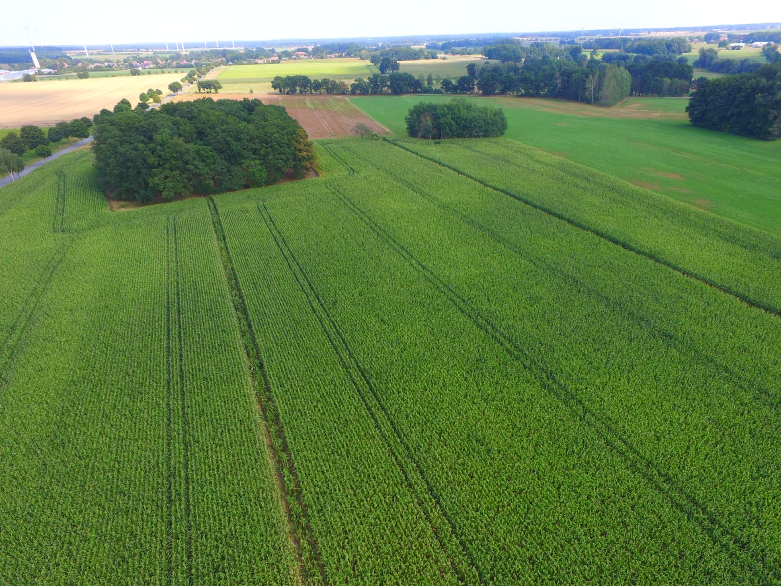 Unser Mais von oben