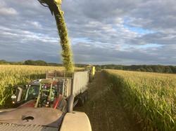 Maisernte mit der Sicht vom Trecker