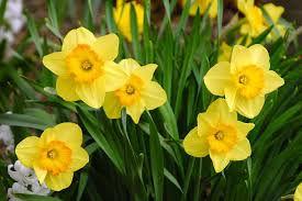marchflowers.jpg