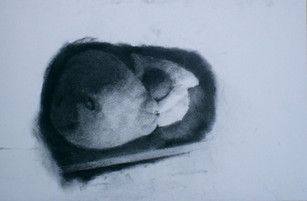 Nesting (black)