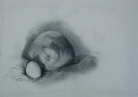 Nesting (light)