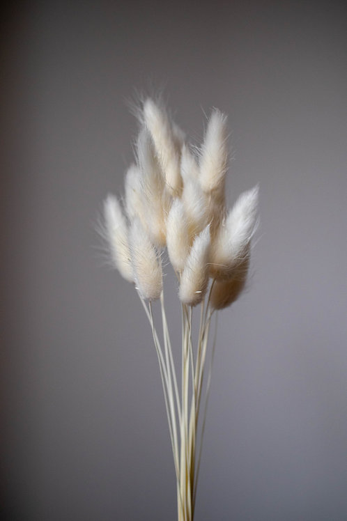 Bleached Dried Bunny Tails