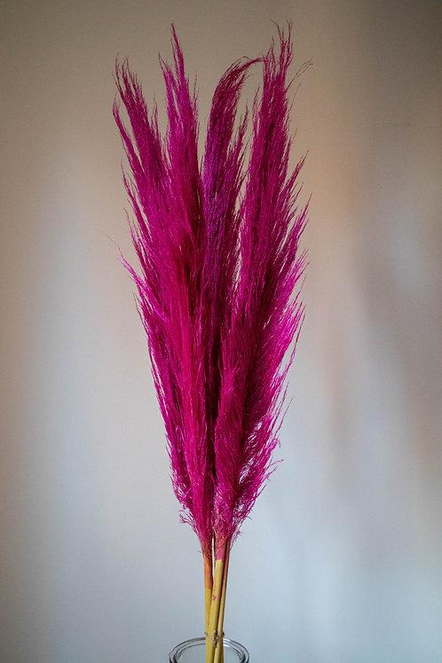 Hot Pink Cortaderia Pampas Grass - 5 stems