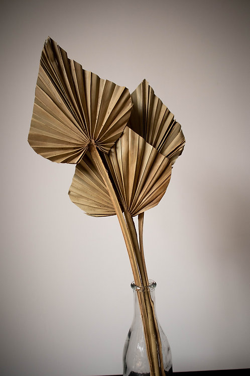 Natural Dried Palm Spear