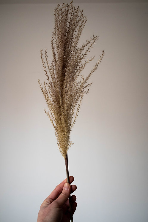 Dried Natural Grass Plume 3 Stems