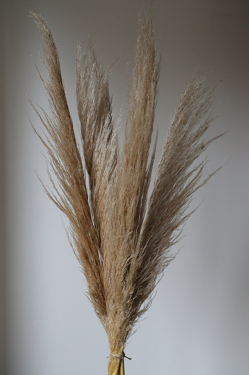 Natural Dried Cortaderia Pampas Grass