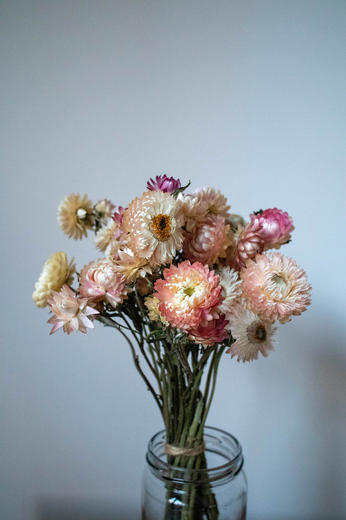 Dried Soft Pink Helichrysum Bunch