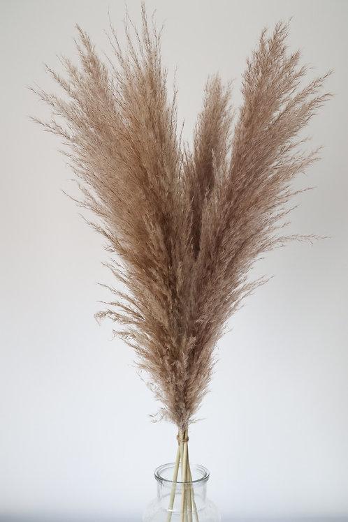 Natural Dried Cortaderia Pampas Grass