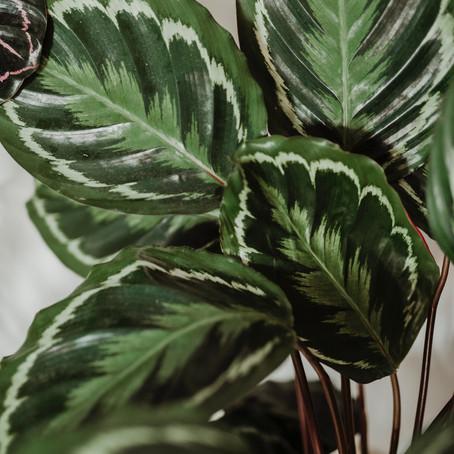 Ev Bitkileri Rehberi