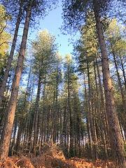Wood for Trees.jpg