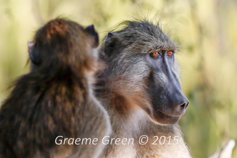 Graeme Green (100)_