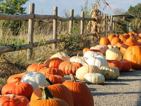 It is Pumpkin Season – See What You Can Find This Year at Abbey Farms