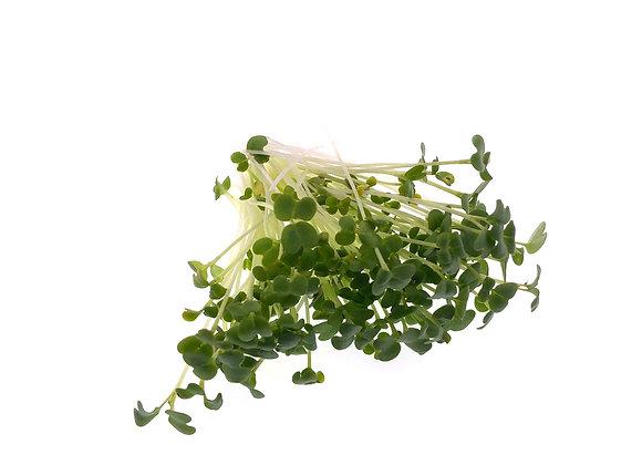 White Mustard Microgreens