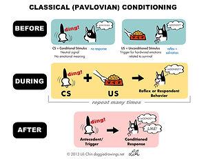 pavlovCC-lilichin.jpg