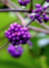 buchart gardens victoria