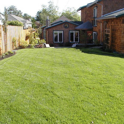 After photo of lawn