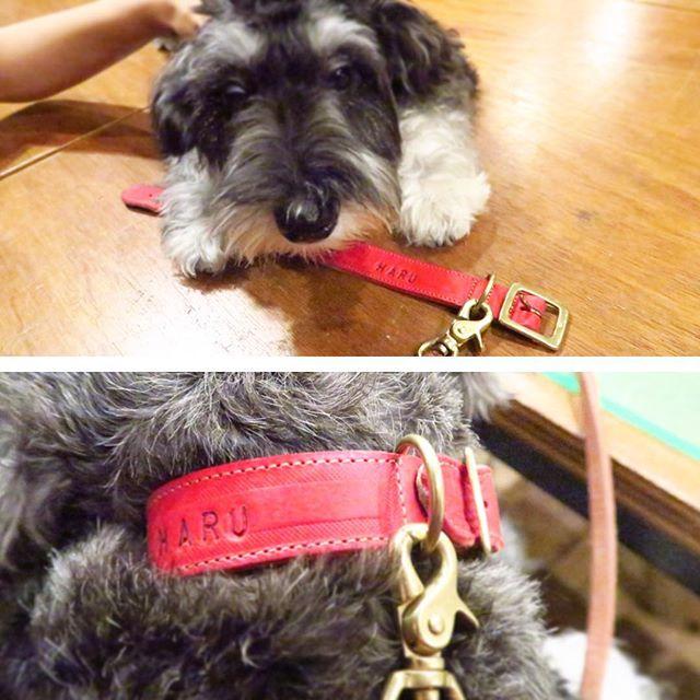 犬首輪_レザー