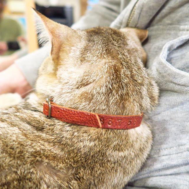 猫首輪_革