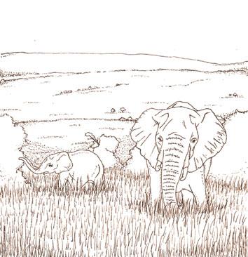 KENYA-MASAI-MARA