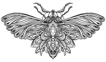 moth-logo-graphic_clipped_rev_1.png