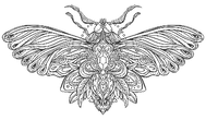 moth-logo-graphic_clipped_rev_1_edited.p