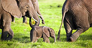 Elephant-BabyBoom-Kenya.jpg