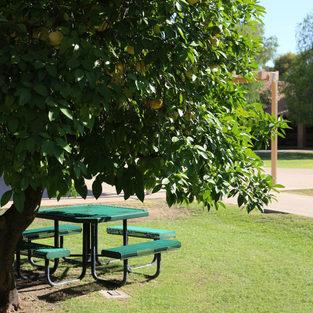 Safe Campus