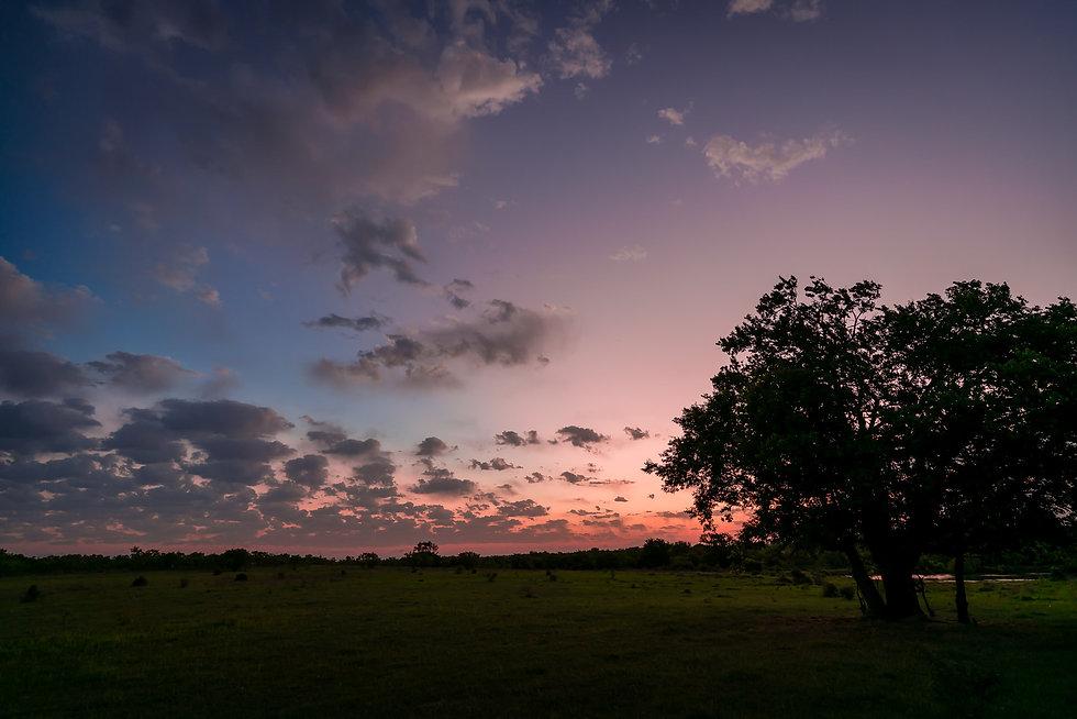 sunrise-tree-north-texas-morning.jpg