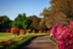 bushes-flora-flowers-158028.jpg