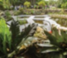 Photo of Wetland Garden at Mounts.