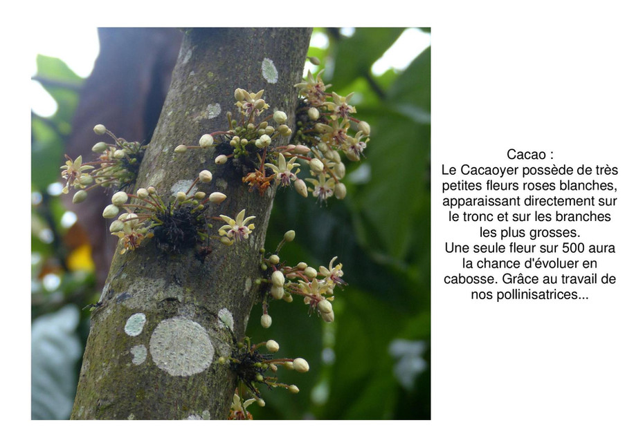 cacao-page-001.jpg