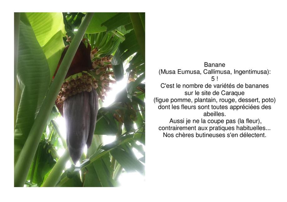 banane-page-001.jpg