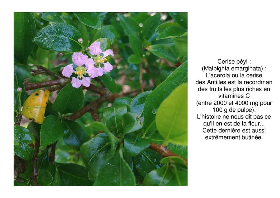 acerola-page-001.jpg