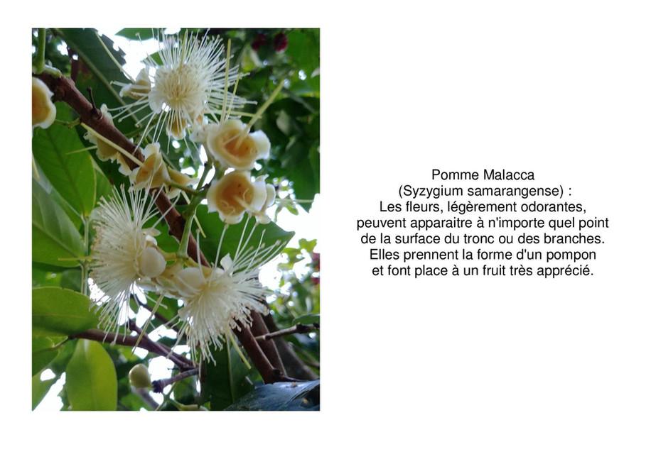 malaka-page-001.jpg