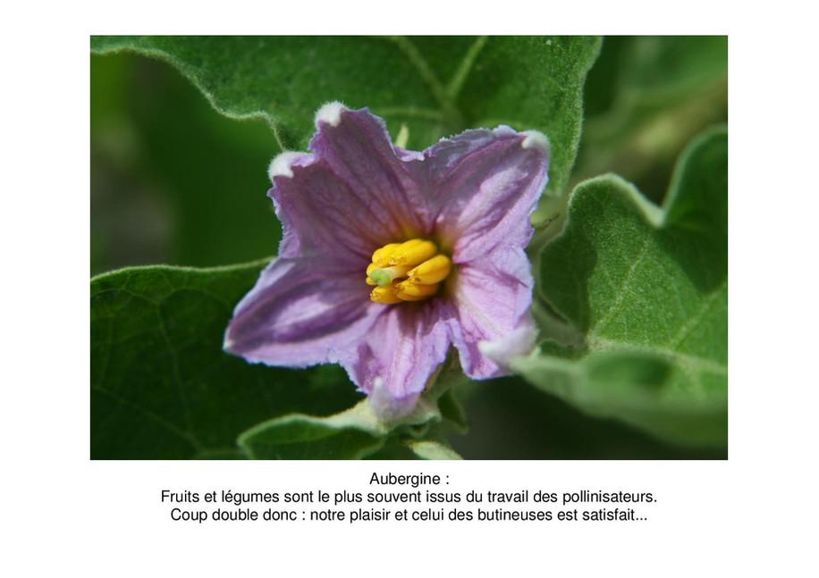 aubergine-page-001.jpg