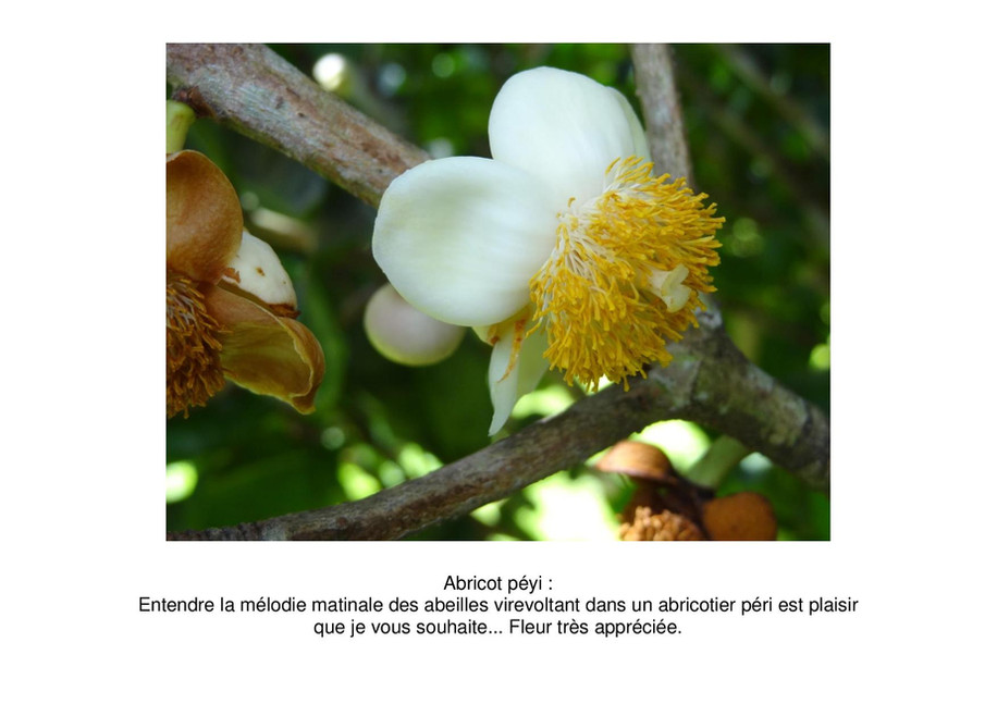 abricot peyi-page-001.jpg