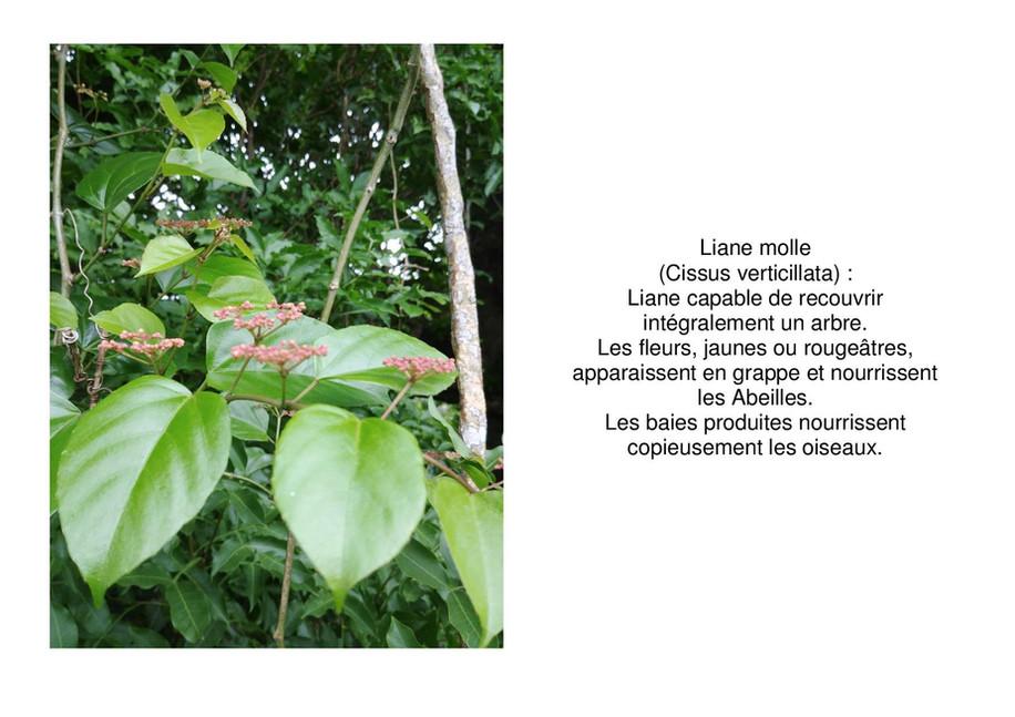liane molle-page-001.jpg